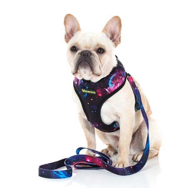 Frenchie-Bulldog-Supply-French-Bulldog-Harness-Galaxy-Lifestyle-600