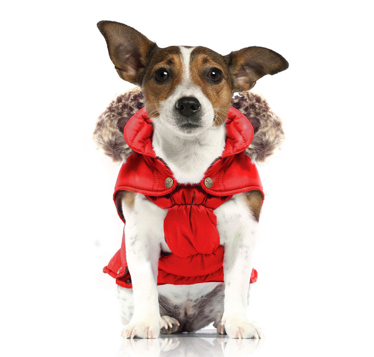 red-dog-coat