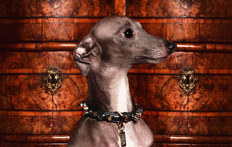 Frida-Firenze-Combination-Stud-Dog-Collar
