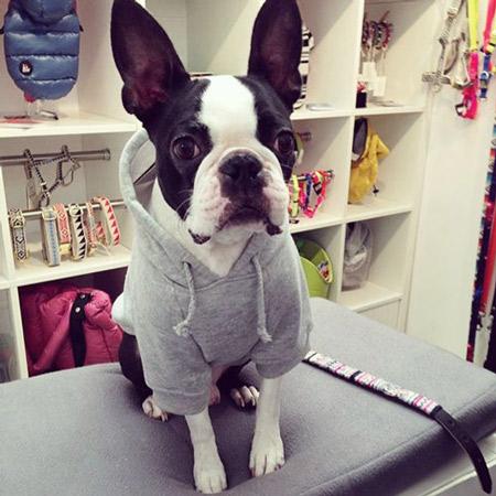 Basil-in-Pethaus-Dog-Hoodie-Grey-450