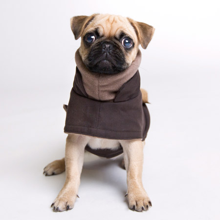 Cloud7-Waterproof-Dog-Coat-Grey-450