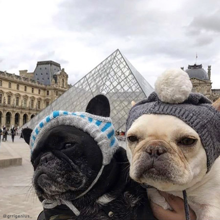 Elle-and-Fira-in-Knitted-Dog-Hats