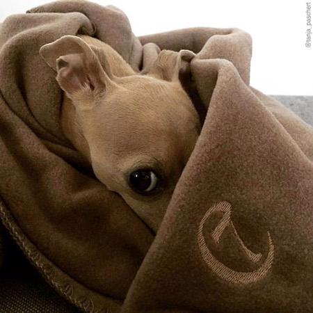 Cloud7-Fleece-Dog-Blanket-Sand-450