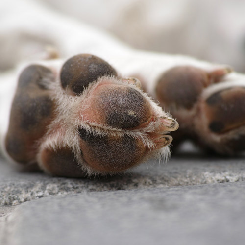 Rinse your dogs paws after Winter walks